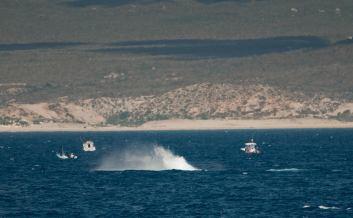 baja4-whale-splash