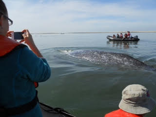 baja6-whale
