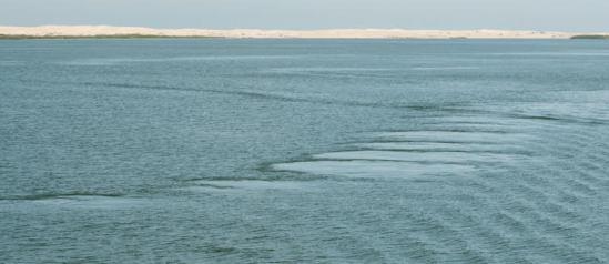 Whale footprints