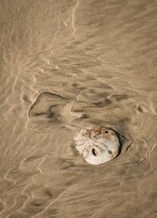 Sand Dollar Waves