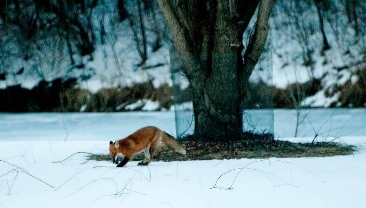 fox-hunting-series-10