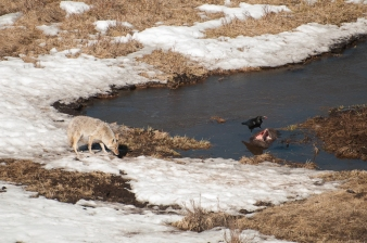 The first day only a little bit of the bison has been pulled up from the bottom of the ponds