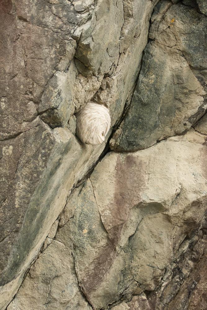 Busy Hornet Nest