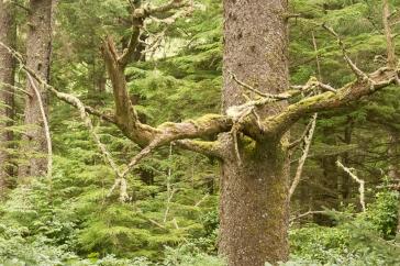 Mossy Coastal Forest