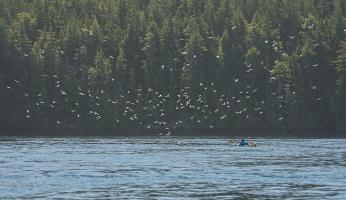 Amazing kayaker experience