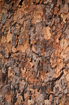 Pine bark patterns