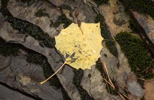 Rain drops on leaves (4)