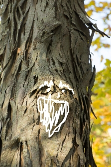 What I see in the bark
