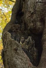 Owl in upper left of crevice