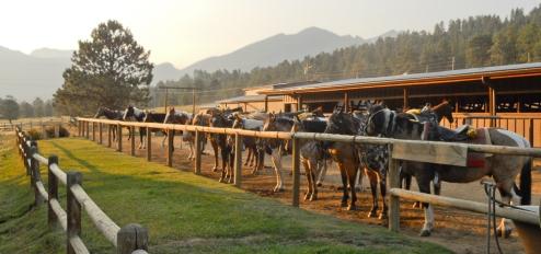 Corral horses