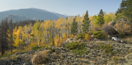 Coming out of the Aspens into the Sagebrush