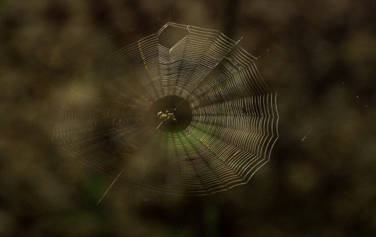 Spider waiting in the center of his web