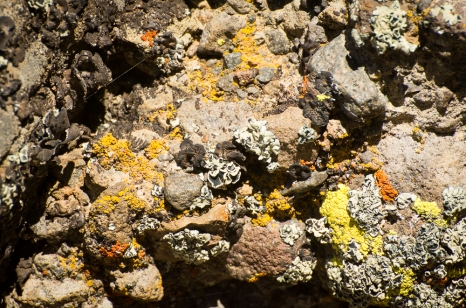 lichens (2)