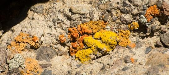 lichens (3)