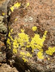 lichens (4)